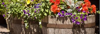 Pots, Planters & Troughs