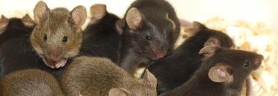 Rat & Mice Killers / Deterrents