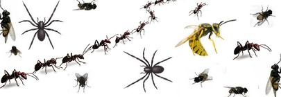 Household Pest Killers & Repellents