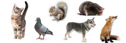 Wildlife & Pet Deterrents