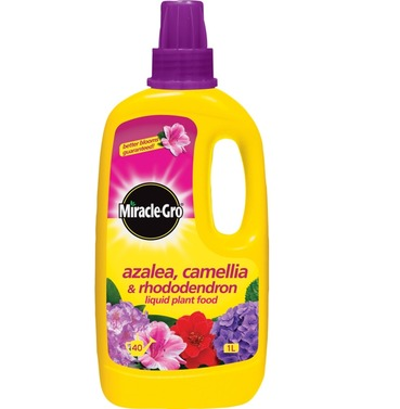 Azalea & Camellia Food - Miracle Gro Liquid