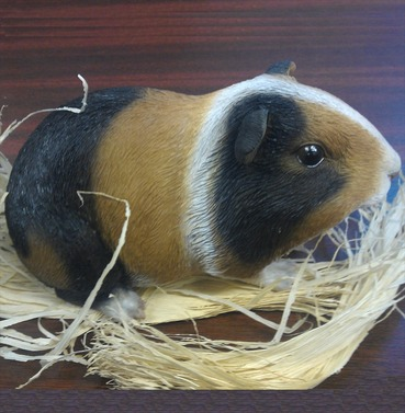 Guinea Pig Pet Pal Garden Ornament - Brown, White and Black