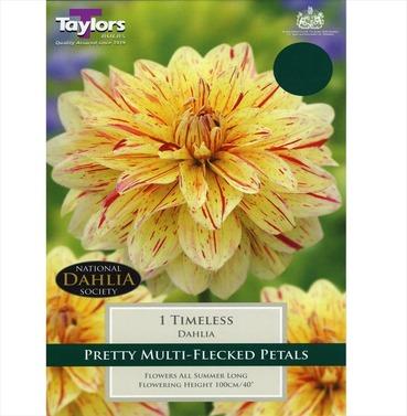 Timeless Dahlia Tuber - Taylors Bulbs