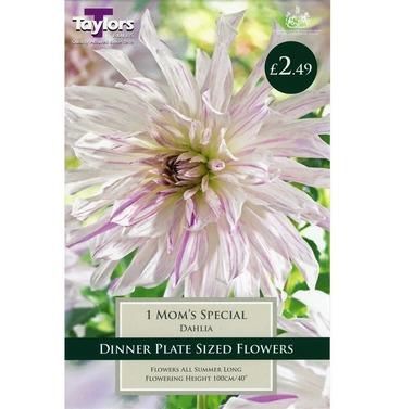 Moms Special Dahlia Tuber - Taylors Bulbs