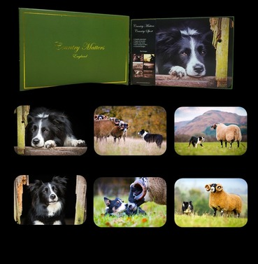 Collie Dog Placemats - Set of 6 Designs  - Country Matters Place Mats