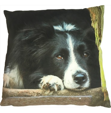 Collie Chilling Out Cushion - Country Matters Dog Print Cushion