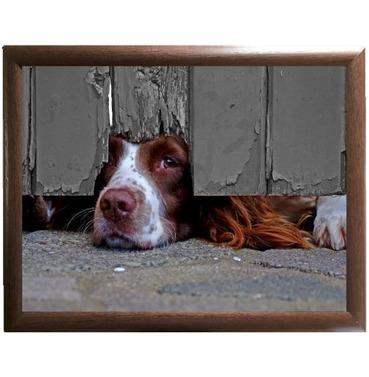 I Spy Spaniel Lap Tray - Country Matters Dog Bean Bag Tray